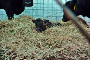Hey, I am in the hay, not the hay to be eaten