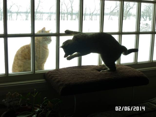 SIlly Sophie is teasing Tygger because he is outside and she isn't